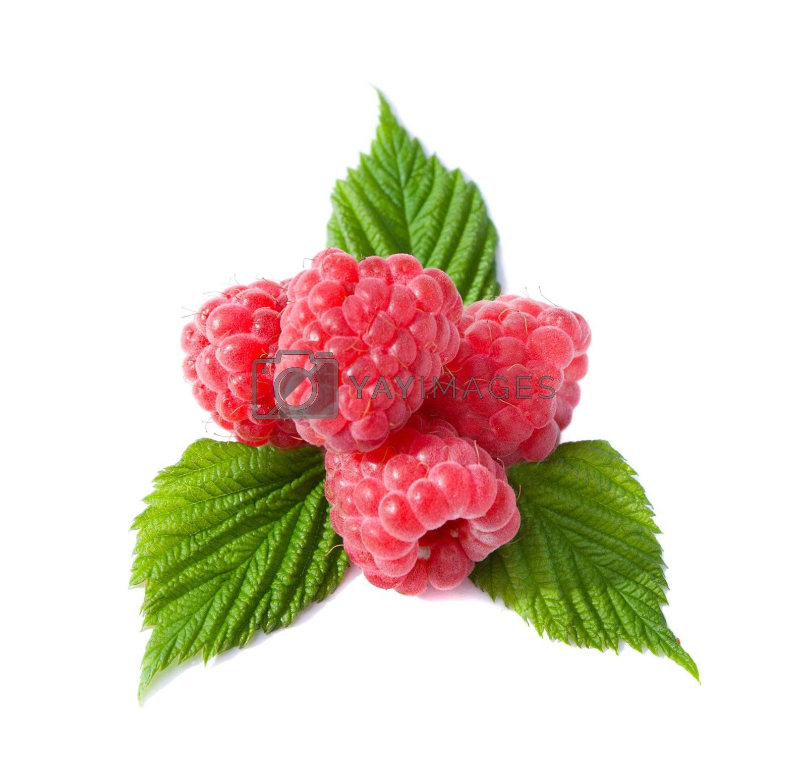 heap of ripe raspberries with leaves, isolated on white