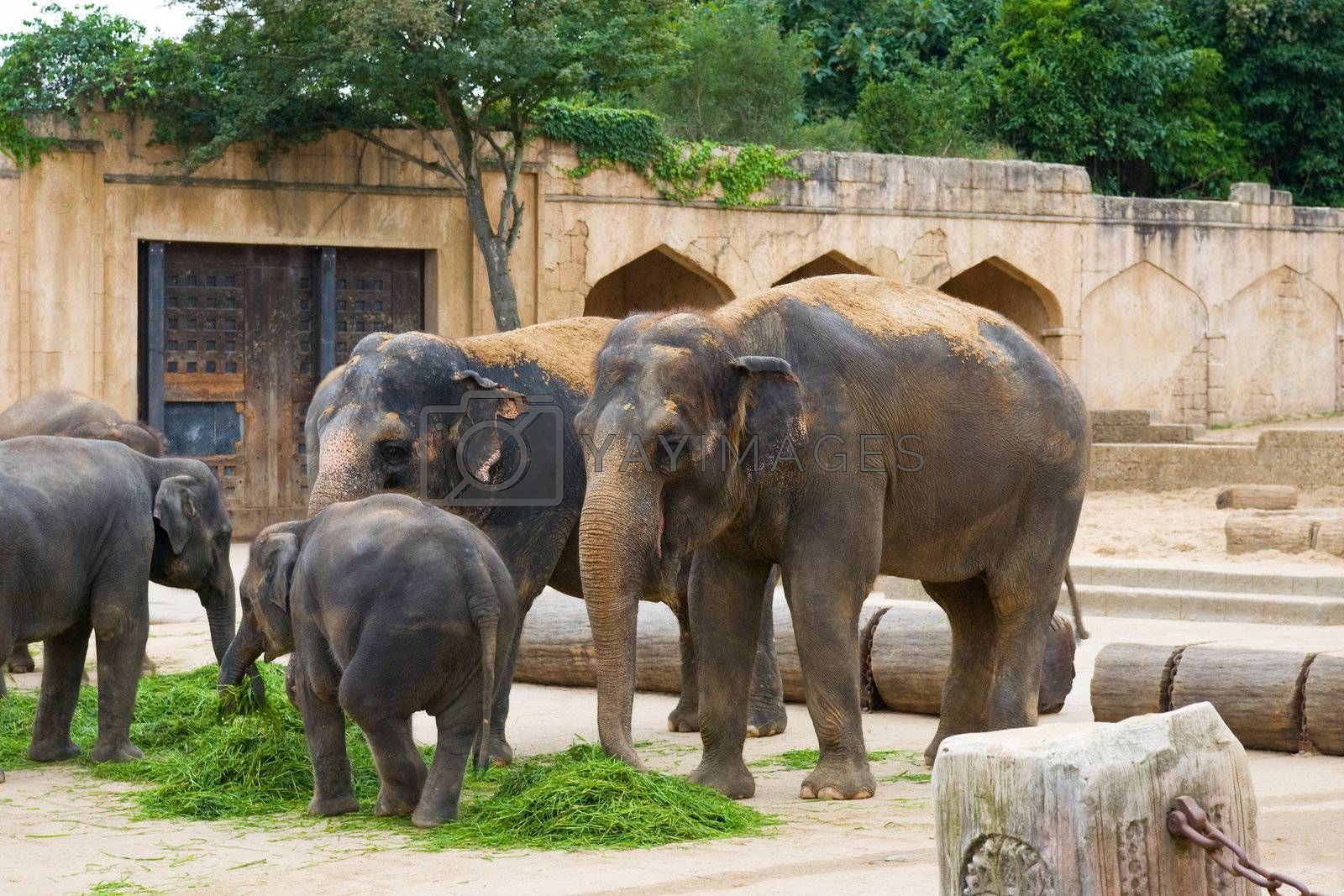 Elephants eat grass on a foreground of ancient wall