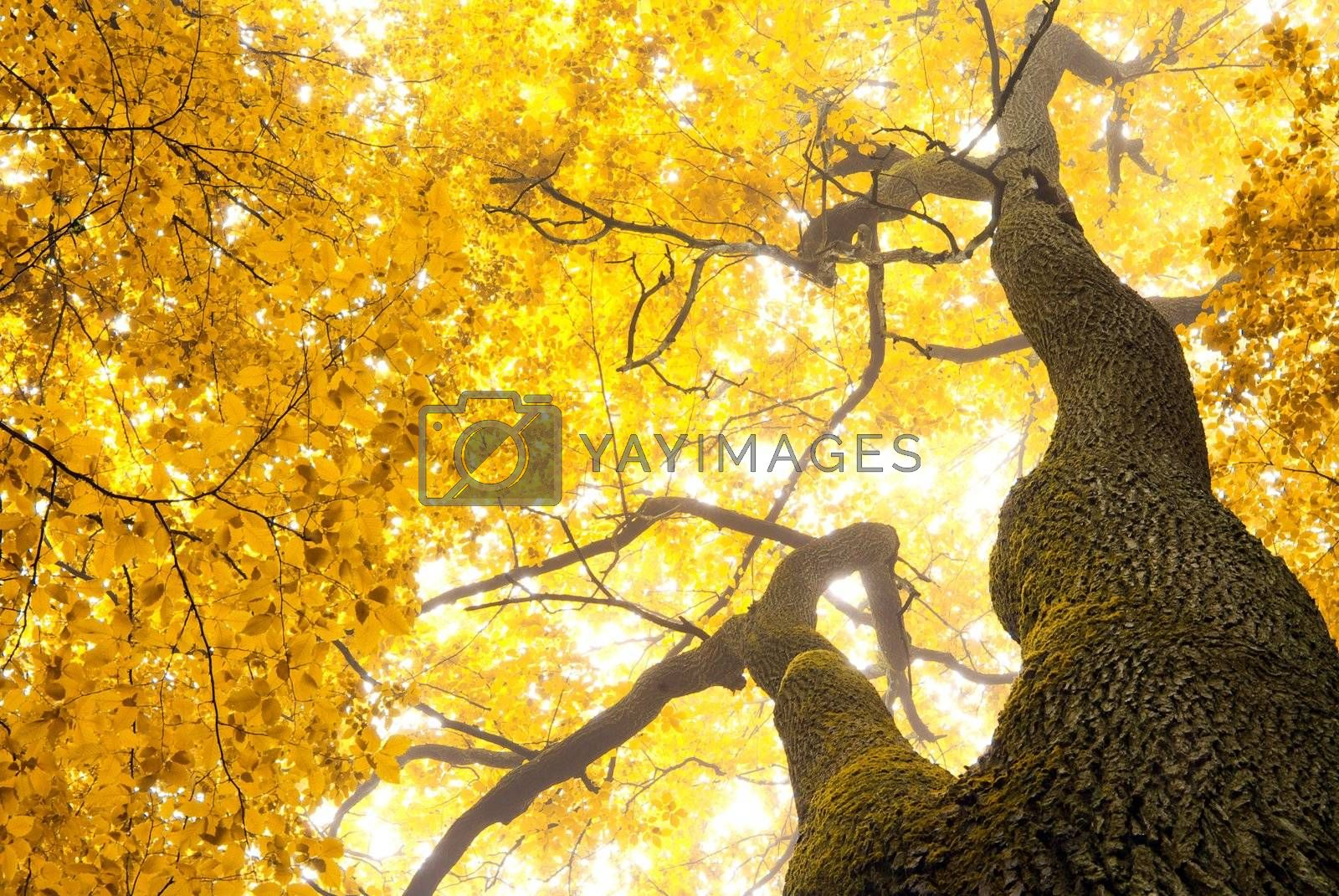 autumn leaves background in sunny day