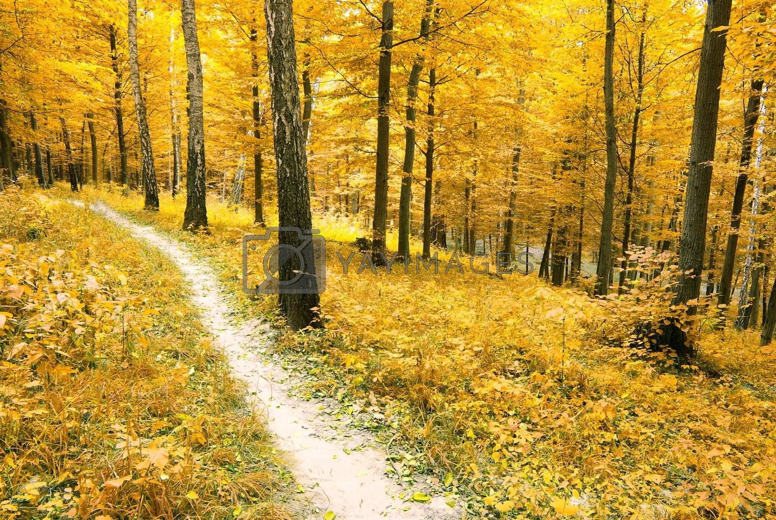 a path is in the autumn forest