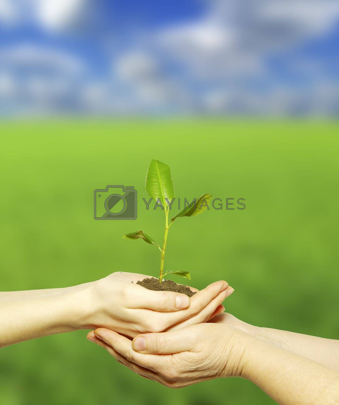 plant in the hand on field background