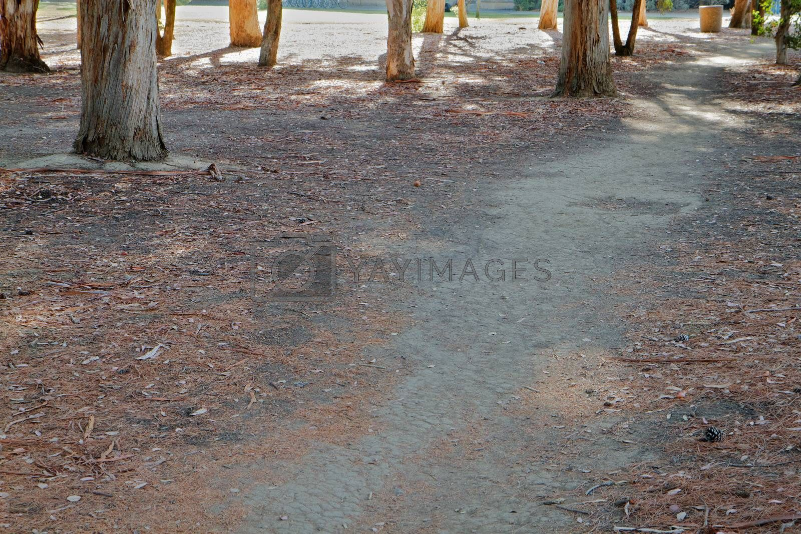 Royalty free image of Park dirt path by bobkeenan