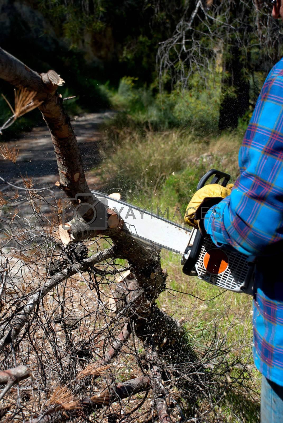 Royalty free image of Lumberjack by hemeroskopion
