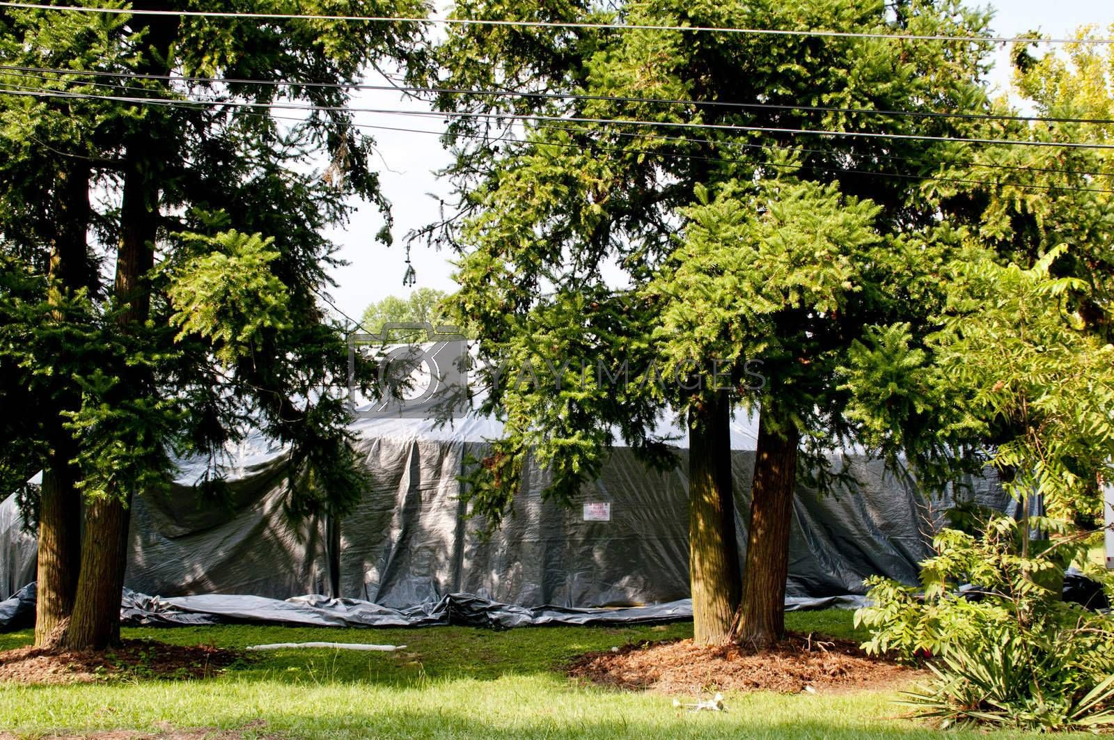 Royalty free image of Fumigation by robeo