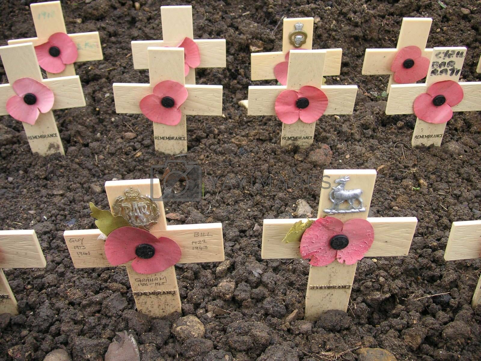 remembrance crosses with poppies on them stuck into the ground