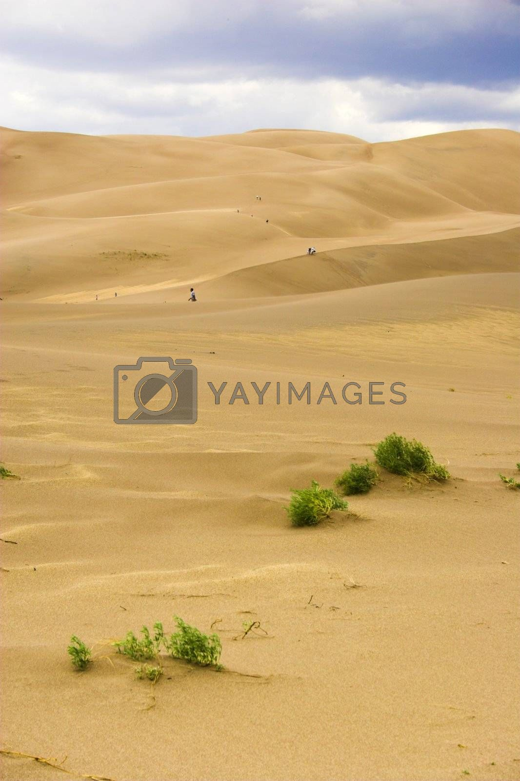 People small like aints walking far-away in dunes with sand being blown over by wind