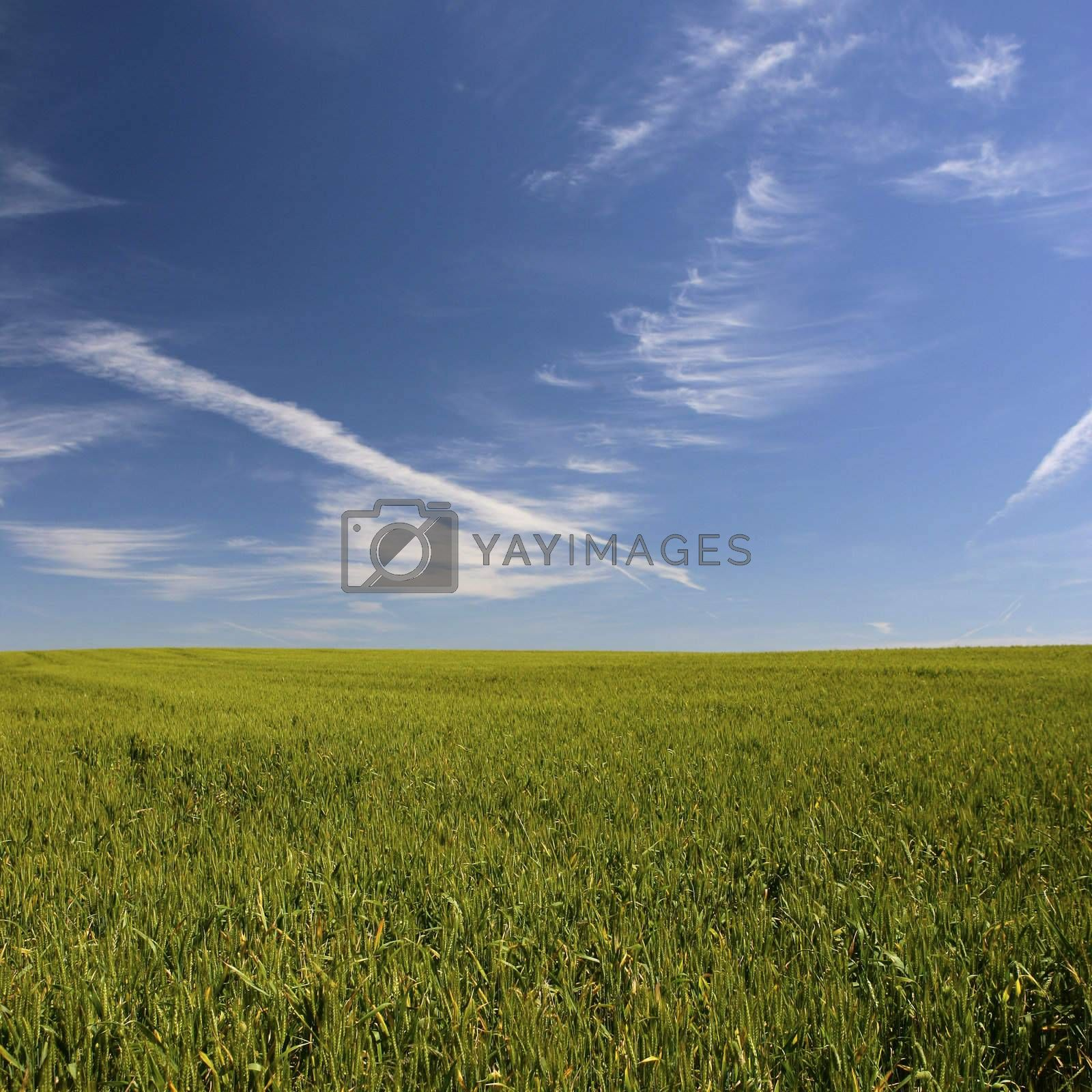 beautiful spring landscape - square format