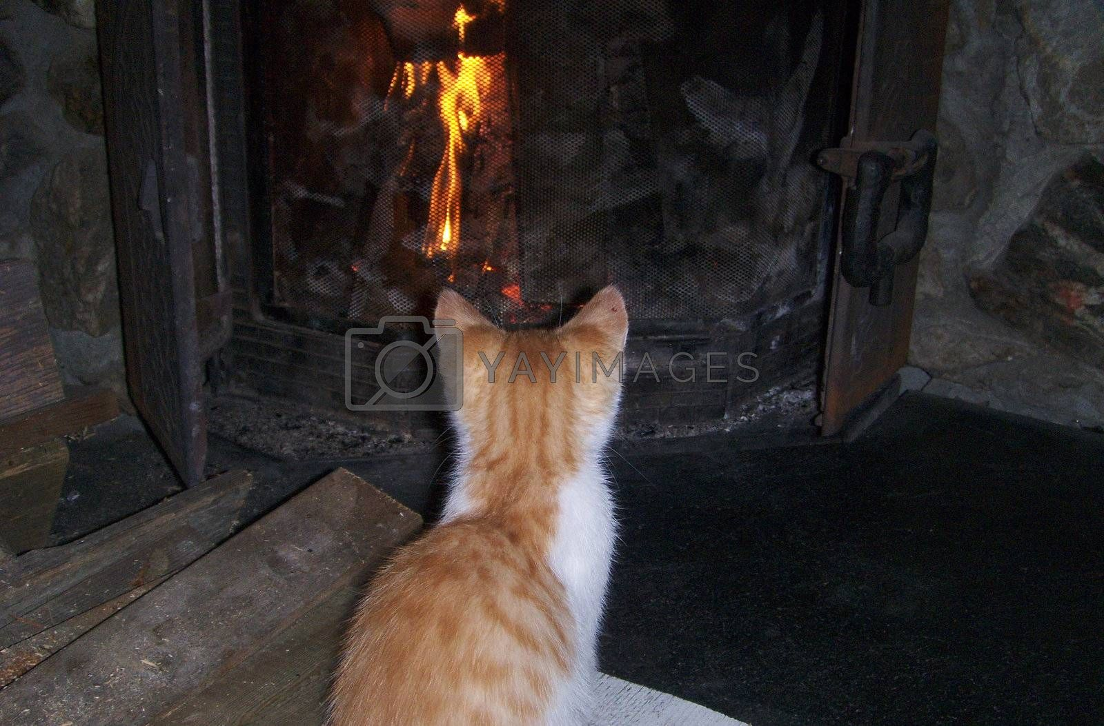 Kitten sitting in front of a fireplace