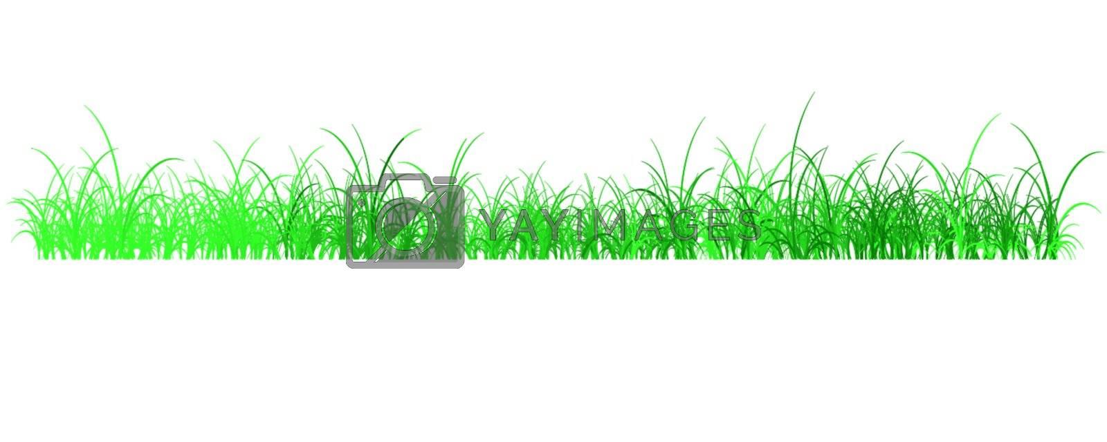 Vector illustration of grass field in spring