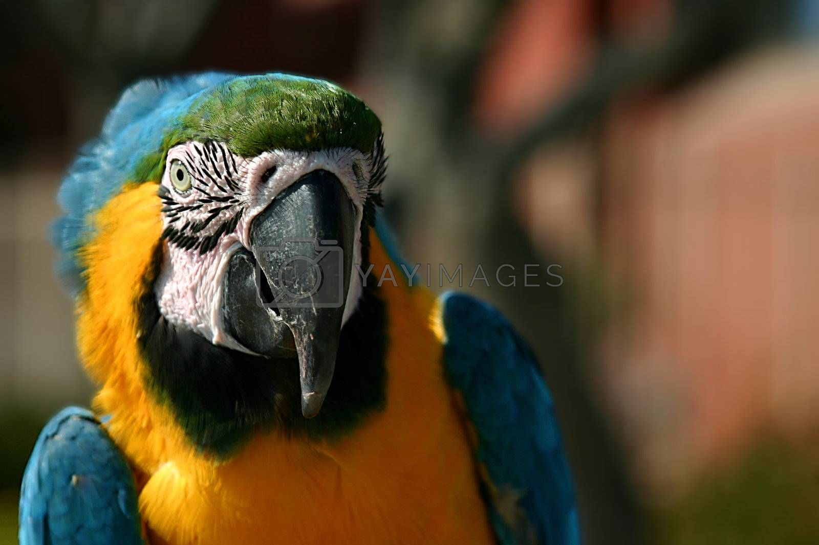 Macaw (3263) by hlehnerer