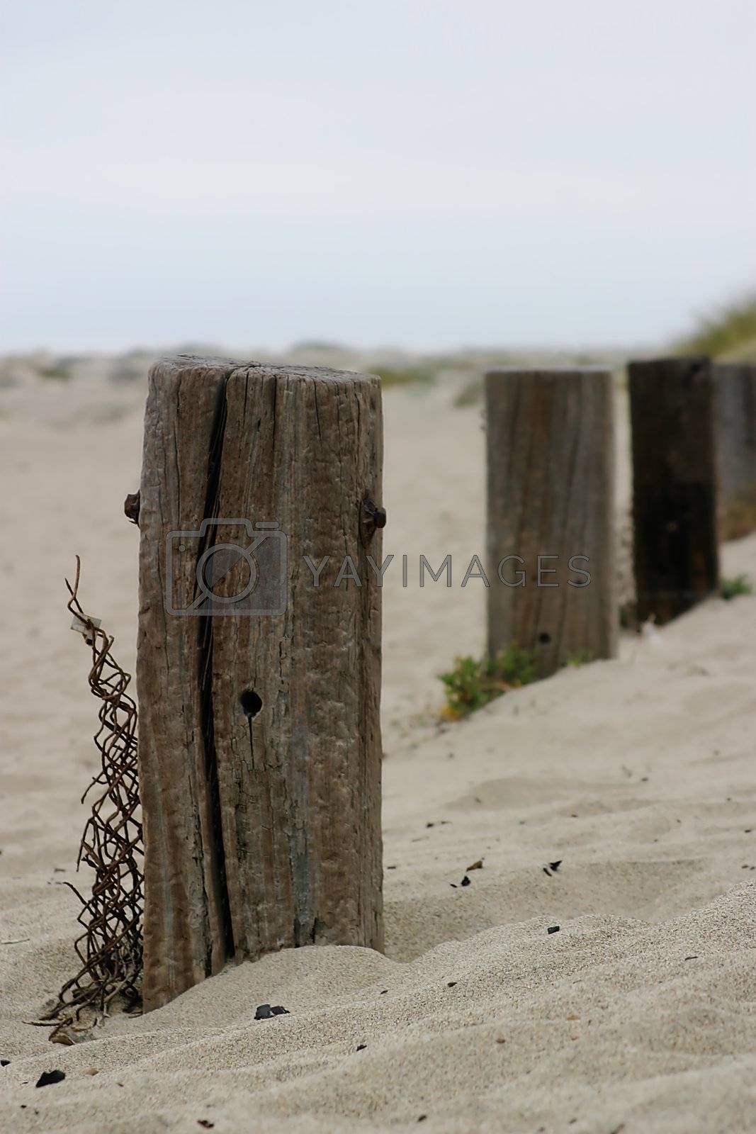 Old Fence Poles by hlehnerer