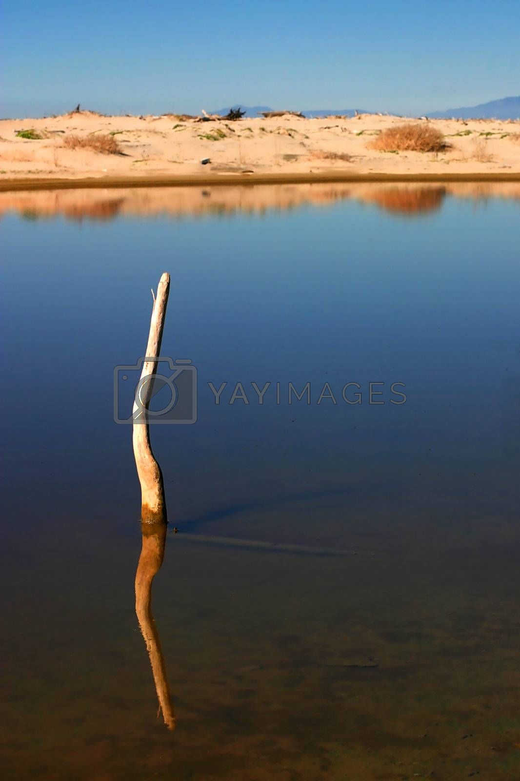 Stick In The Water by hlehnerer