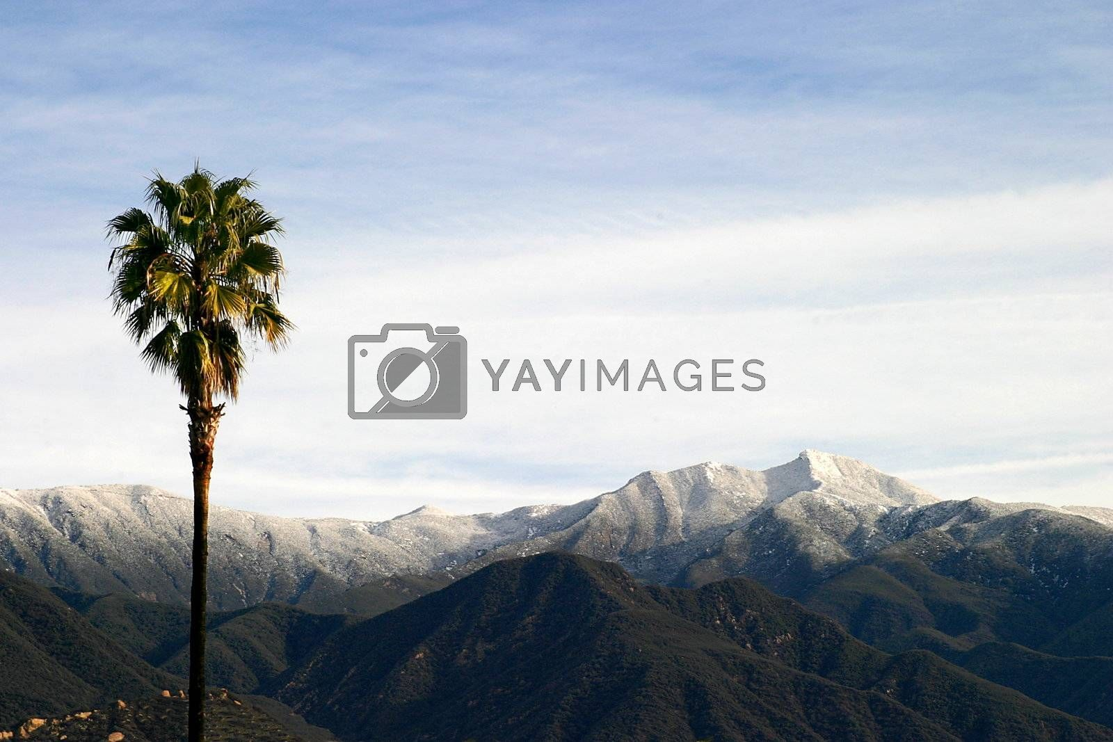 Southern California Snow (4315) by hlehnerer