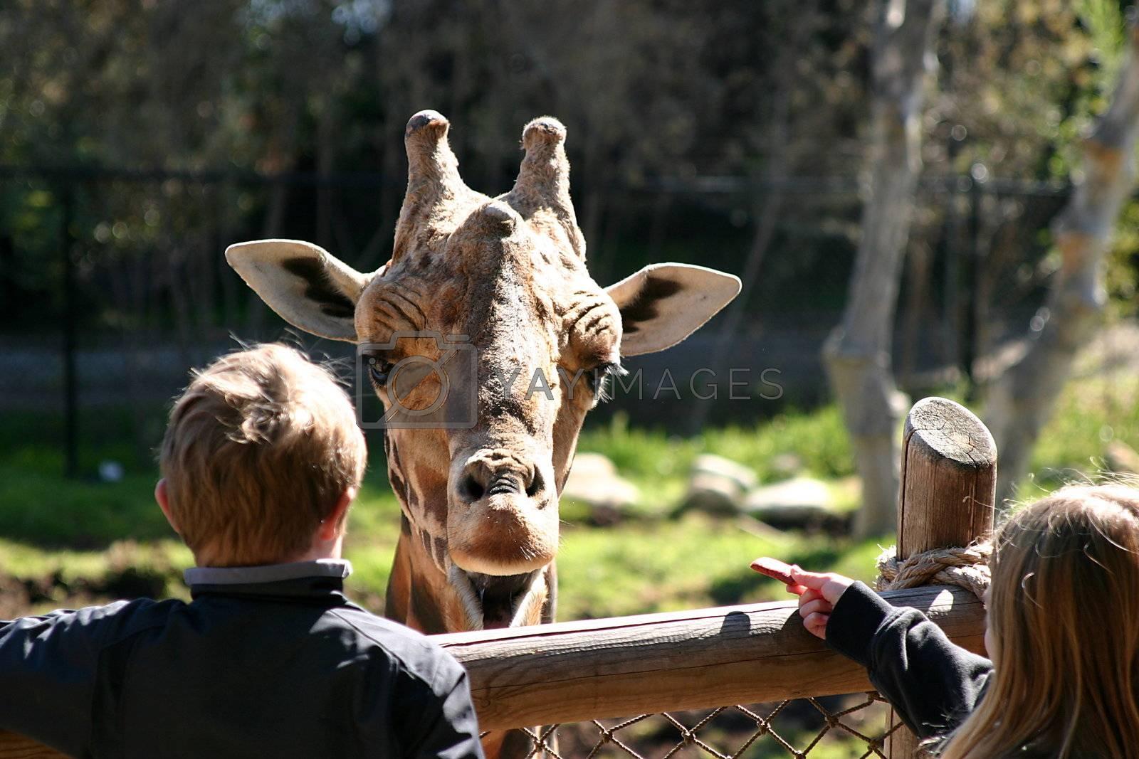 Baringo Giraffe (4763) by hlehnerer