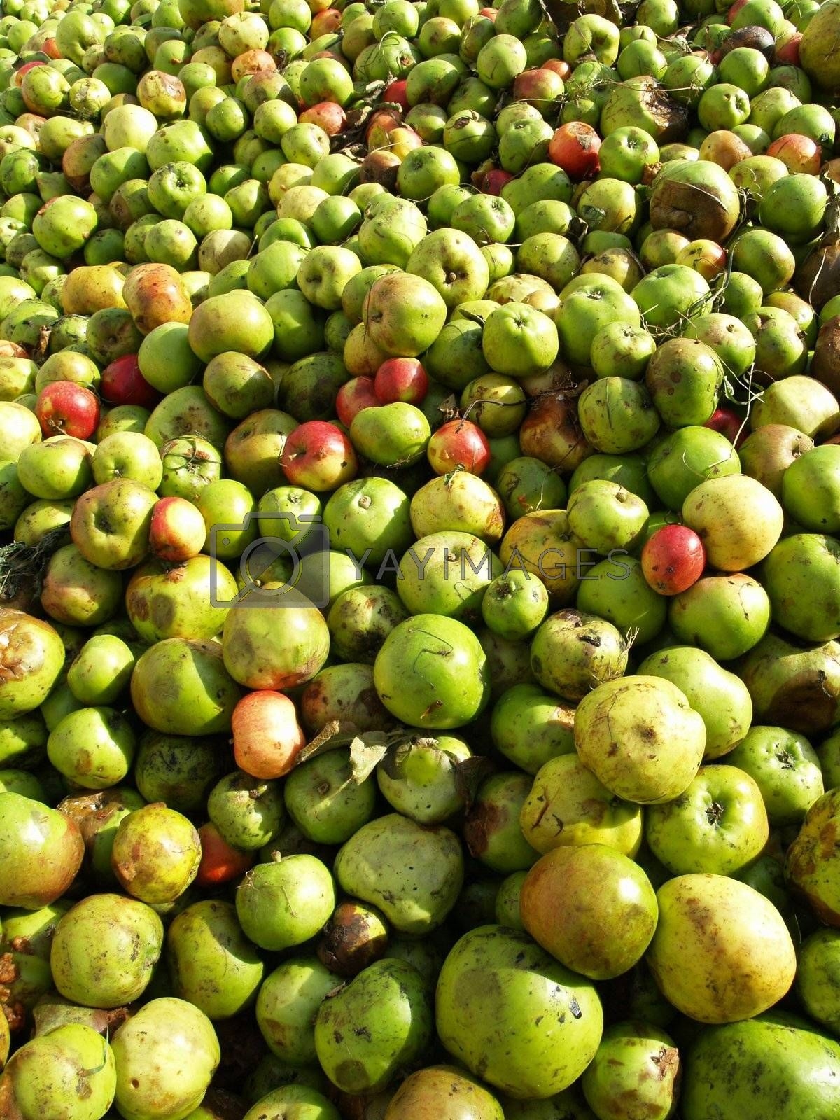Green Apples by Frame