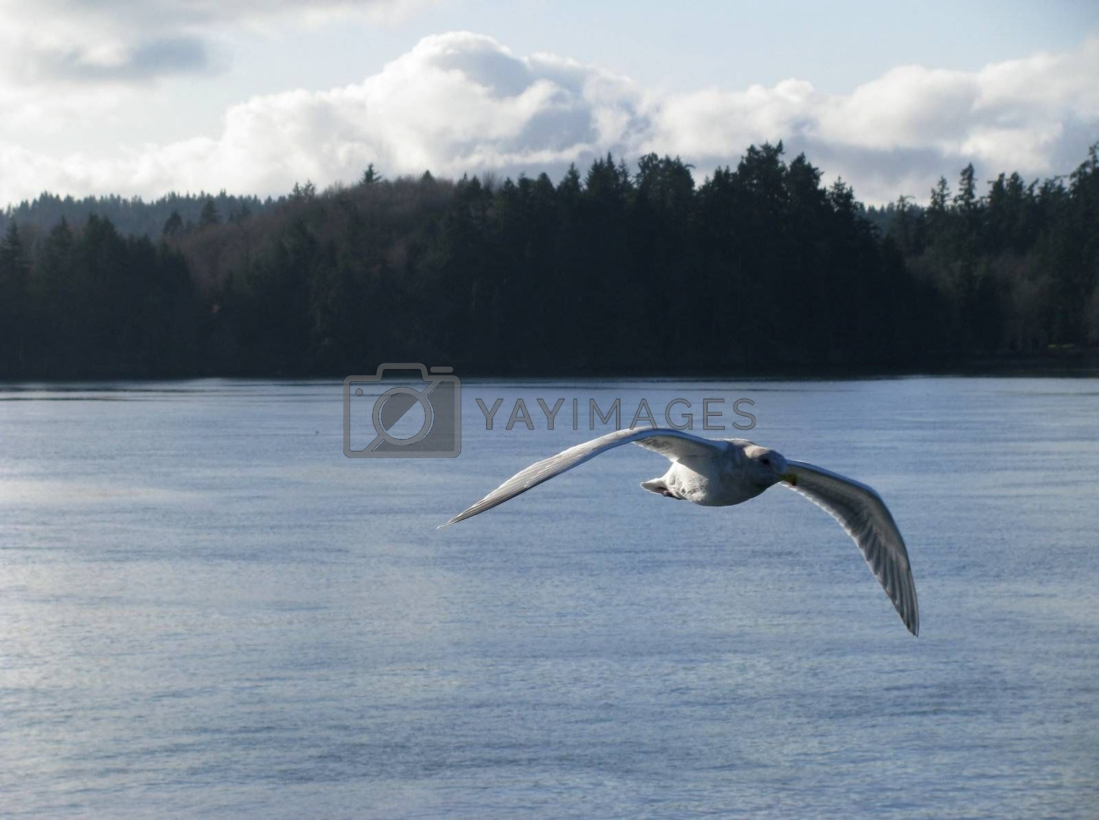 Wings of Freedom by mwp1969