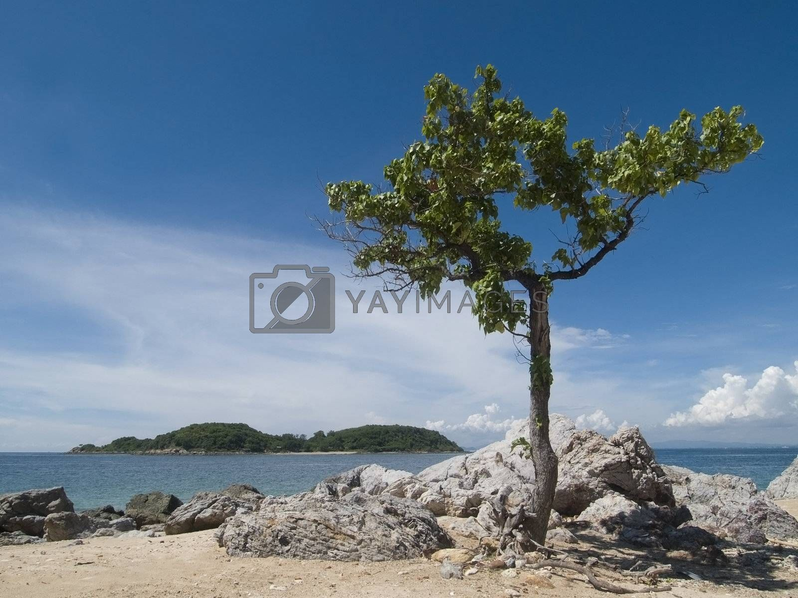Tree on the beach by epixx