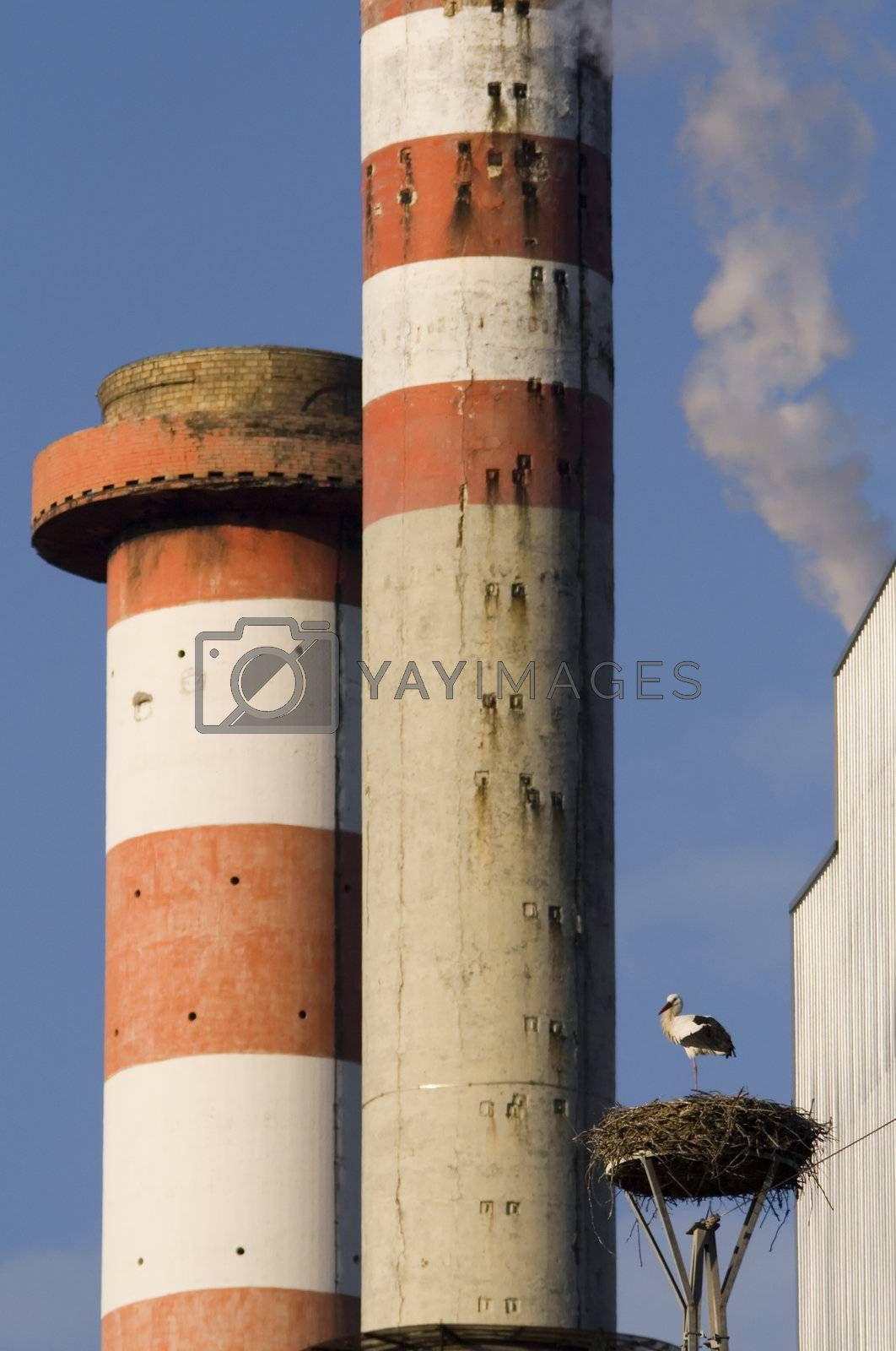Stacks and stork  by PauloResende