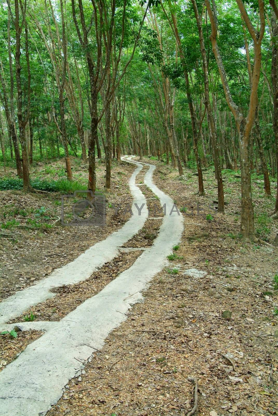 Road through a rubber plantation by epixx