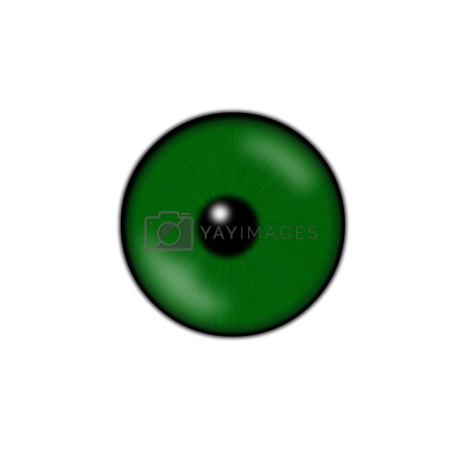 green eyeball isolated on a white background
