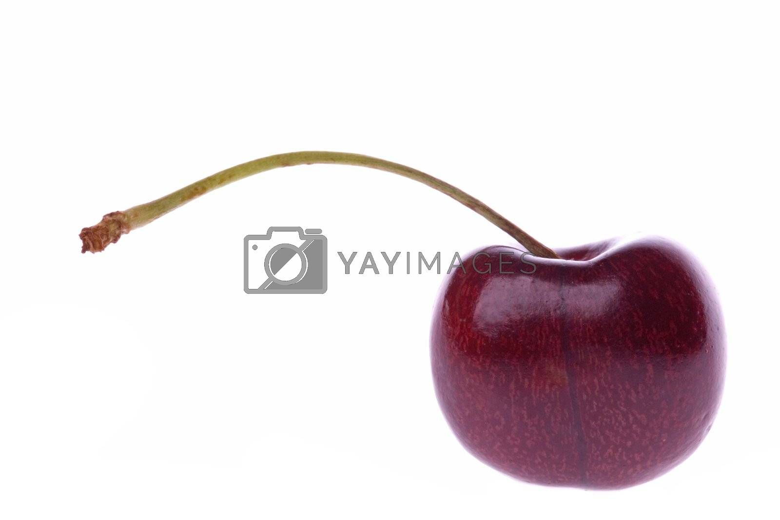 Isolated macro image of a fresh cherry.