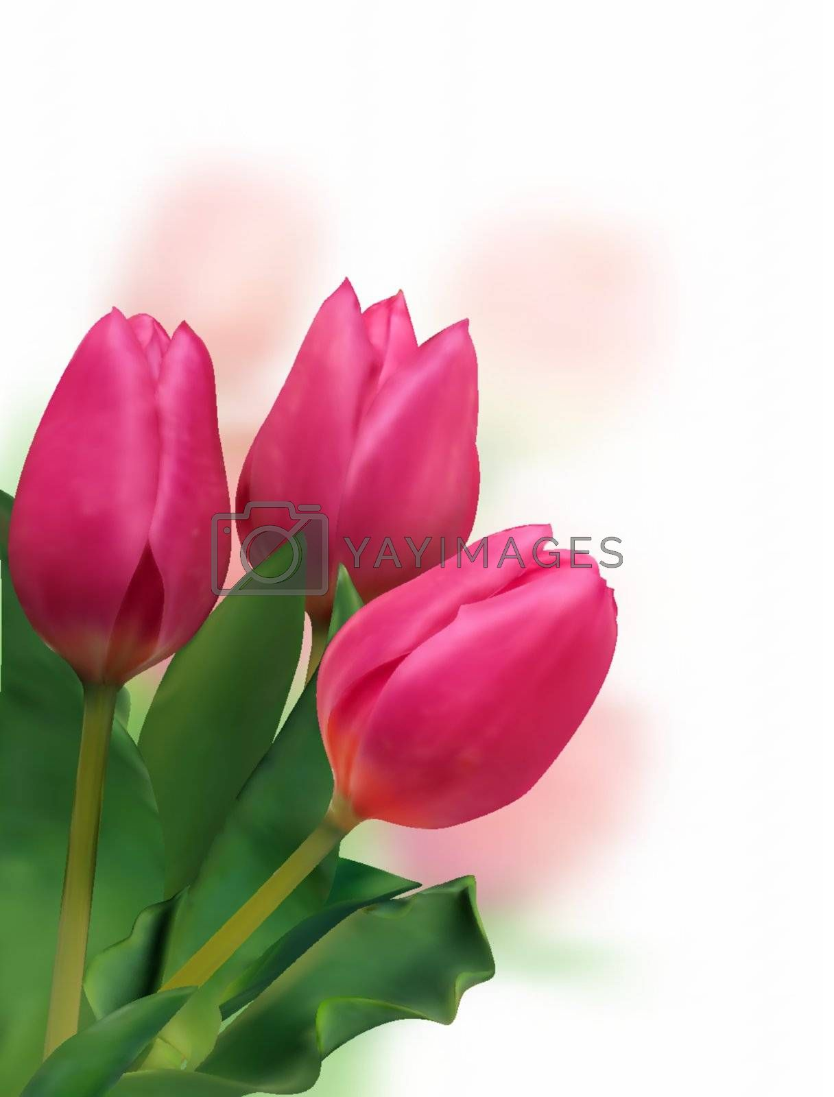 bunch of tulips on white. EPS 8 vector file included
