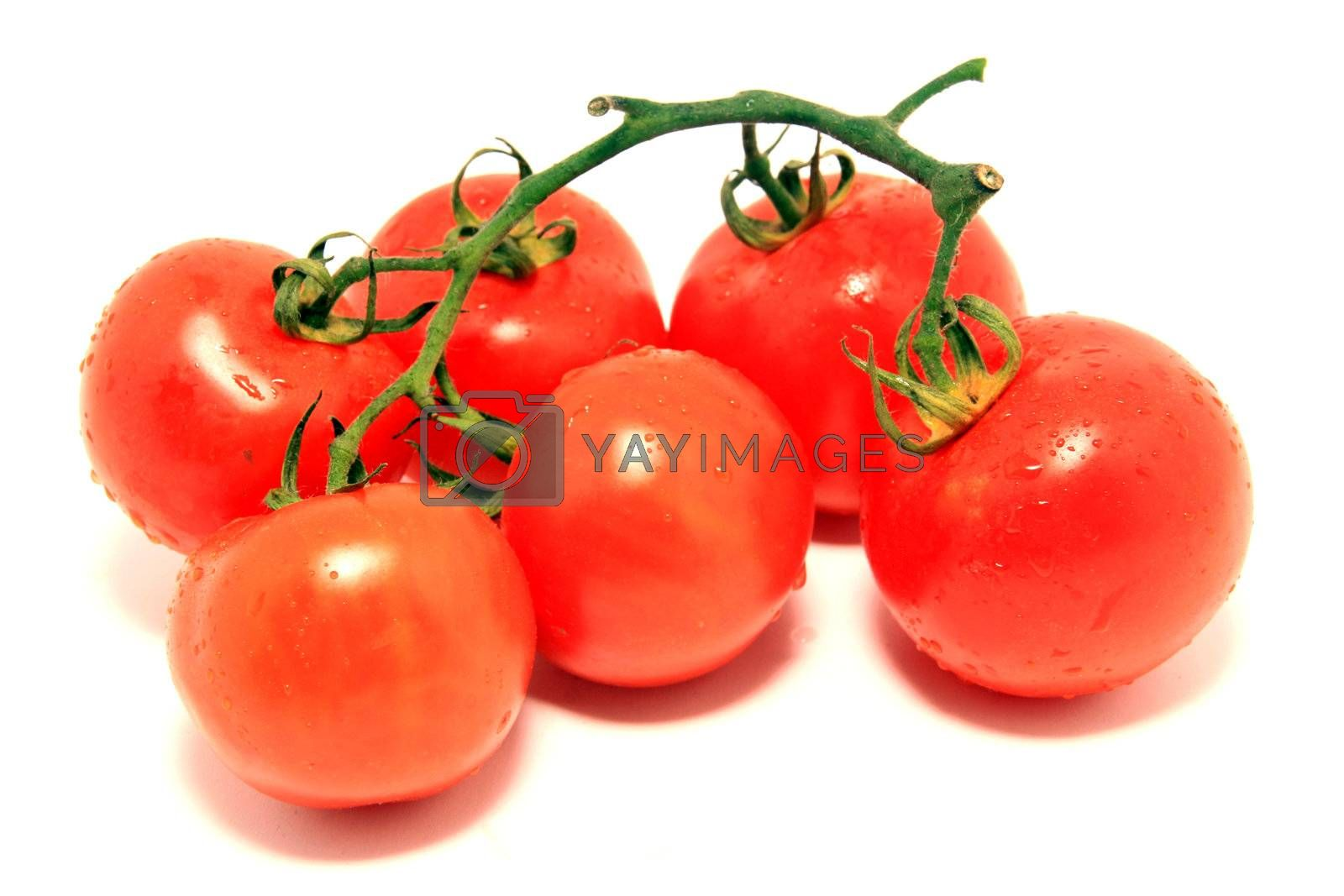 beautiful red tomatoes over white background