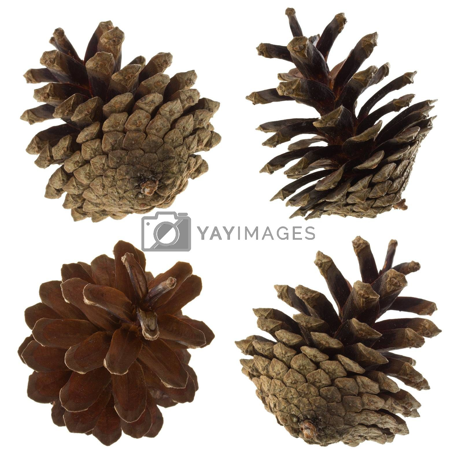 close-up pine cones set, isolated on white
