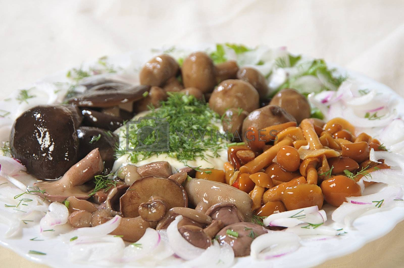 cold appetizer from a few types of the pickled mushrooms