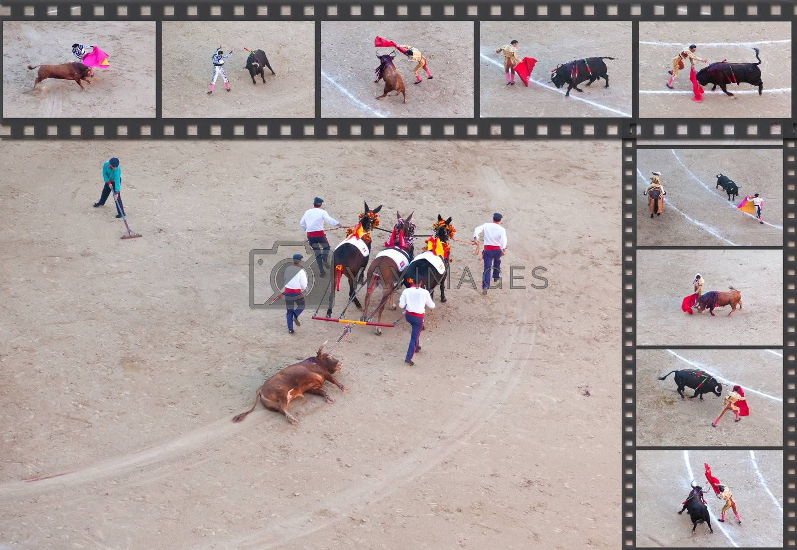 Bullfight - the one of the most controversial events in the world. Some factual images of a bullfight in Madrid, Spain on OCTOBER 1, 2010.