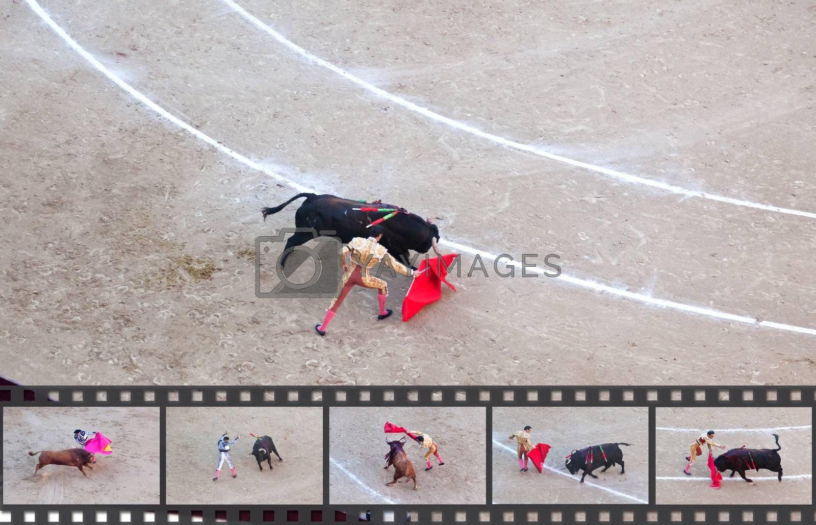Royalty free image of Bullfight - the one of the most controversial events in the world by gary718