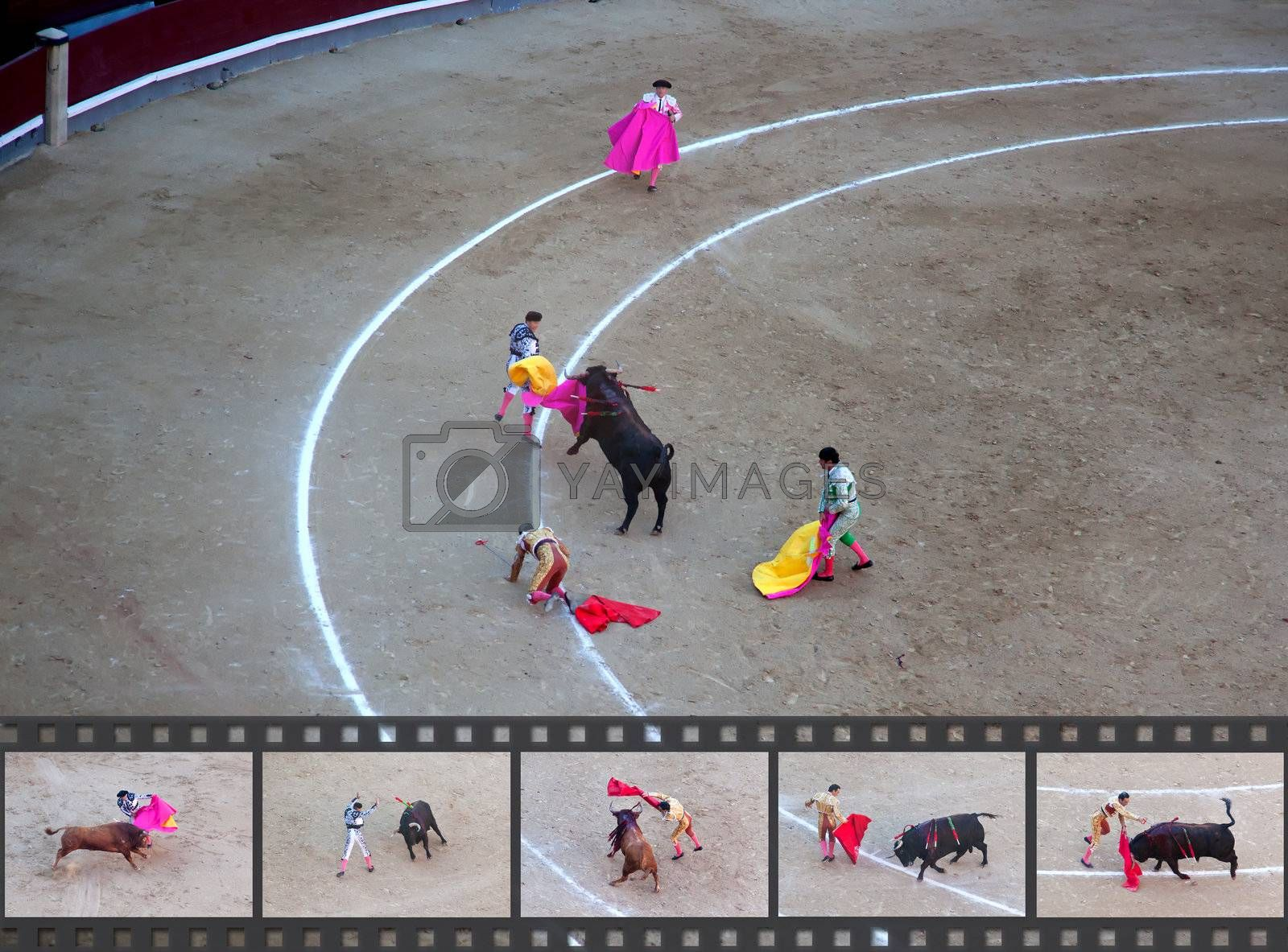 a bullfighter has most got hurt in a bullfight. Some factual images of a bullfight in Madrid, Spain on OCTOBER 1, 2010.