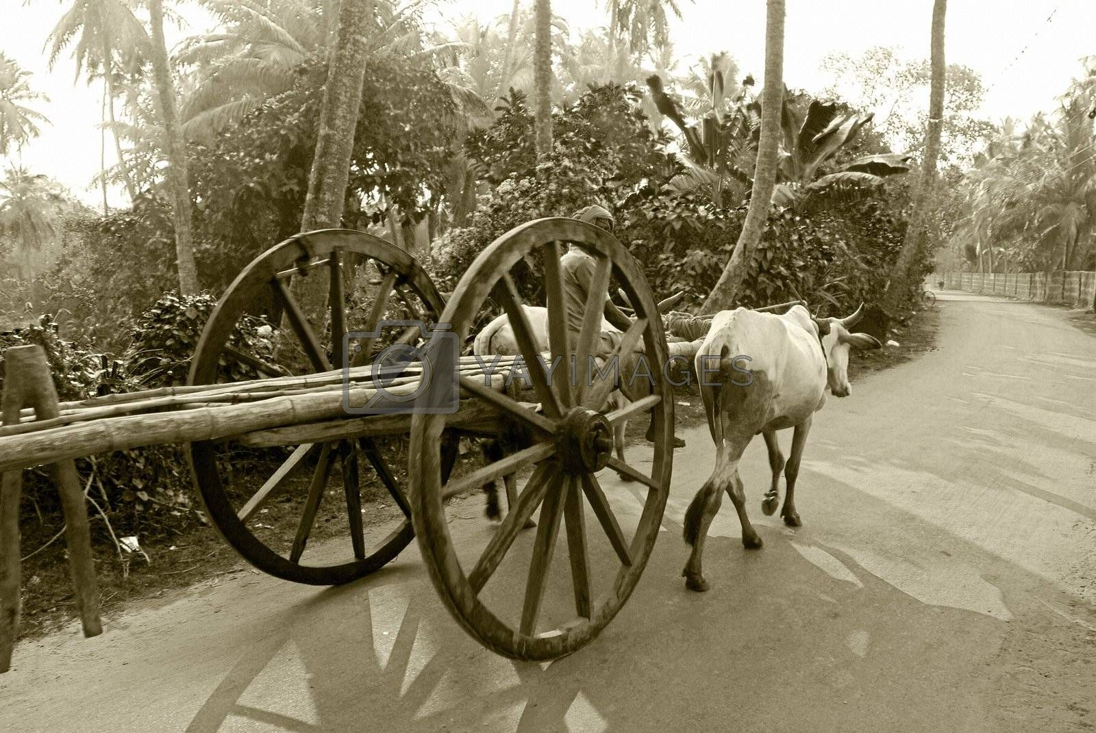 A bullock cart moving on the road