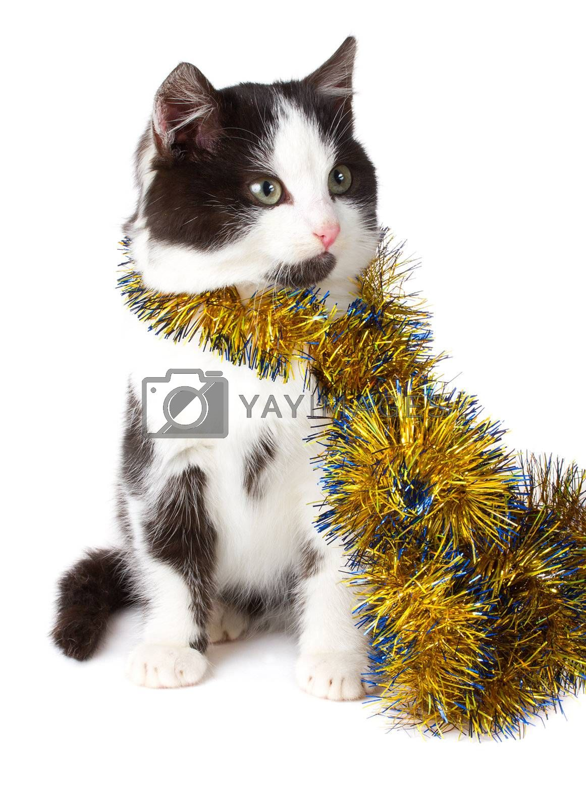 close-up cat with garland, isolated on white