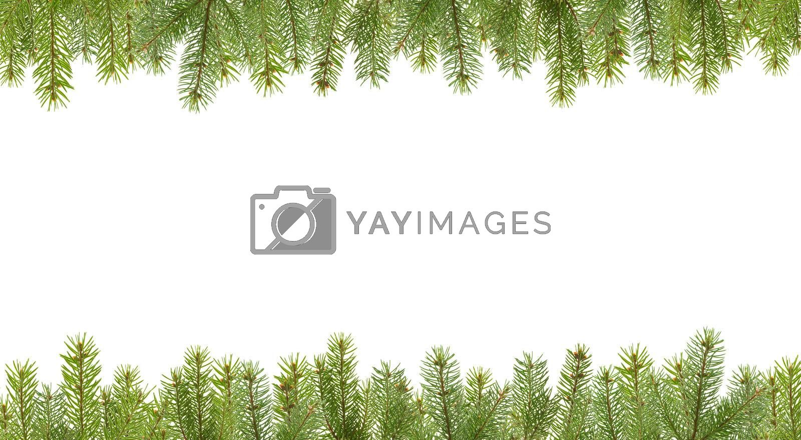 frame from firtree branches, isolated on white
