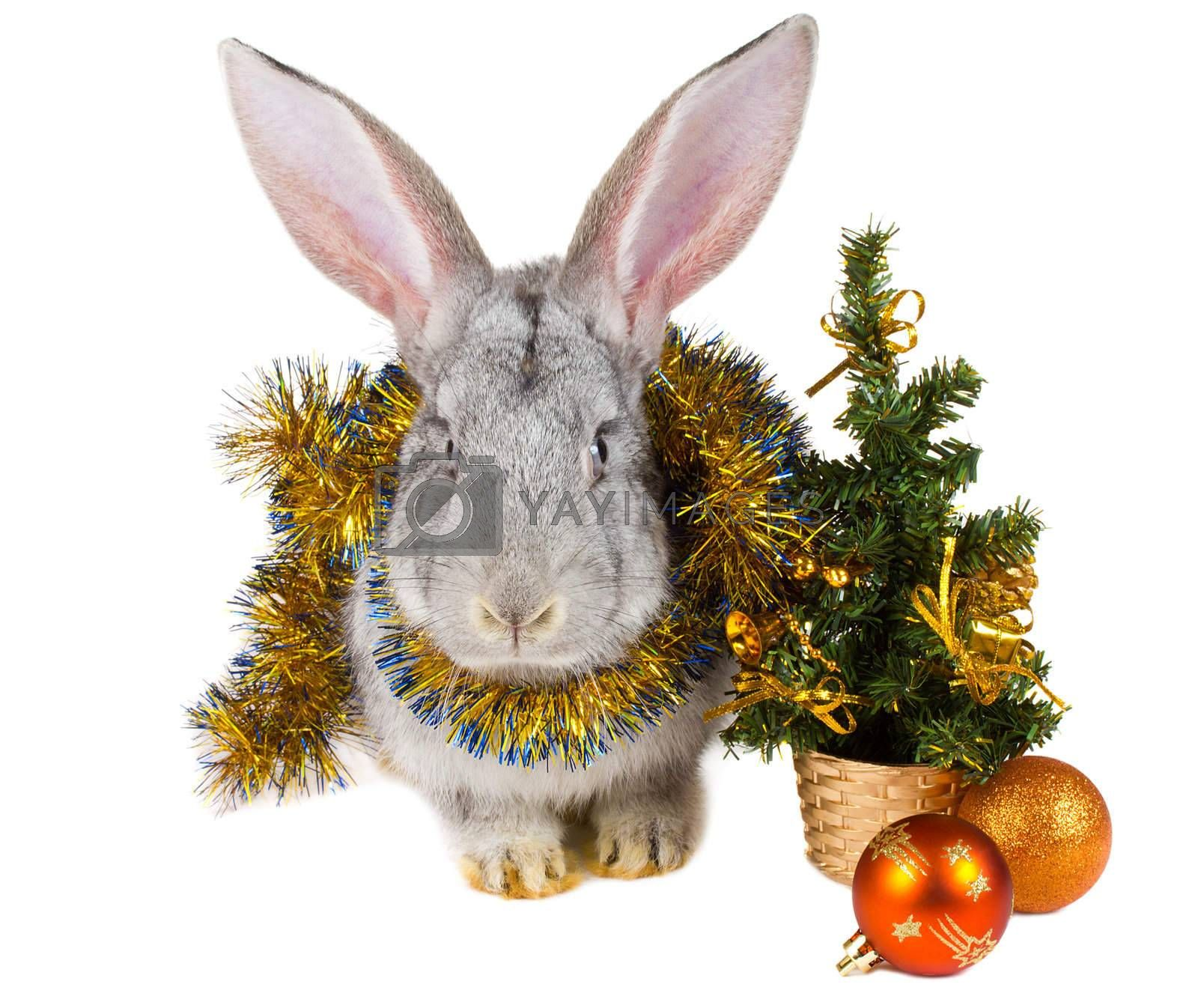 close-up gray rabbit and christmas decorations, isolated on white