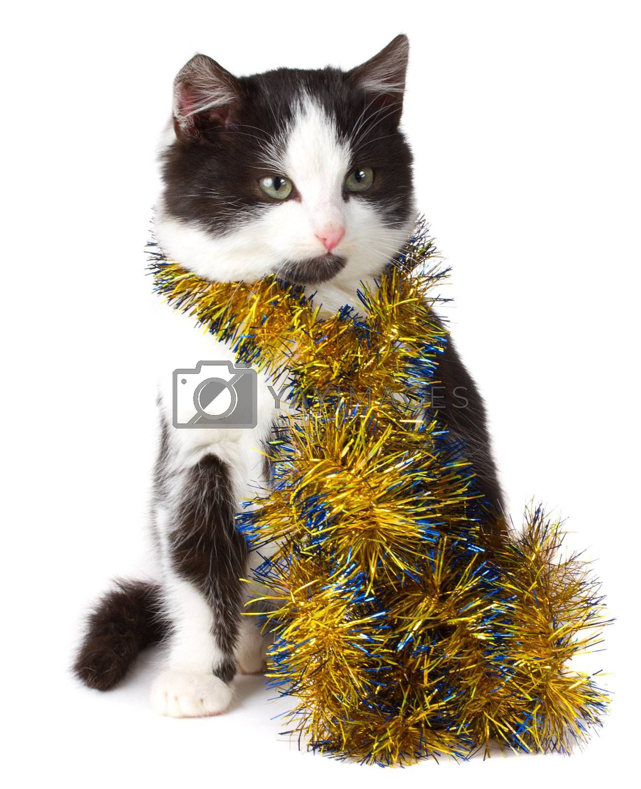 close-up kitten and christmas decorations, isolated on white