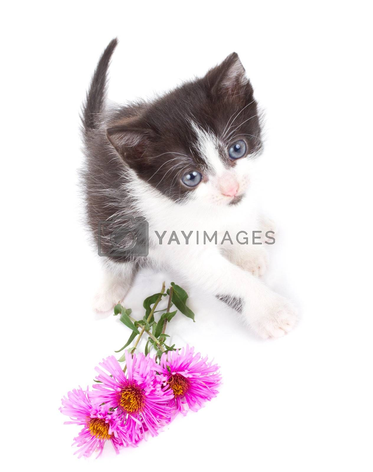 small kitten and flowers, isolated on white