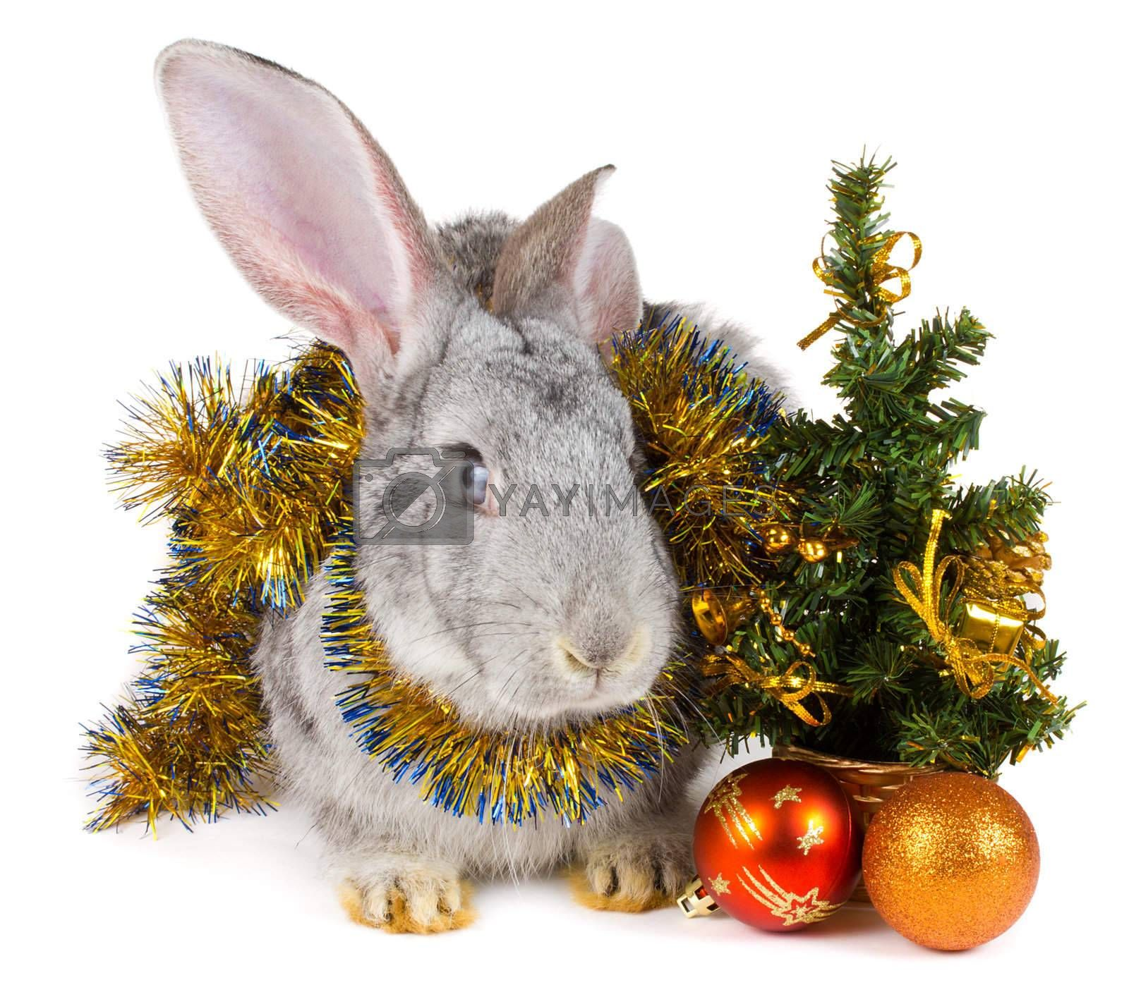 close-up rabbit and christmas decorations, isolated on white