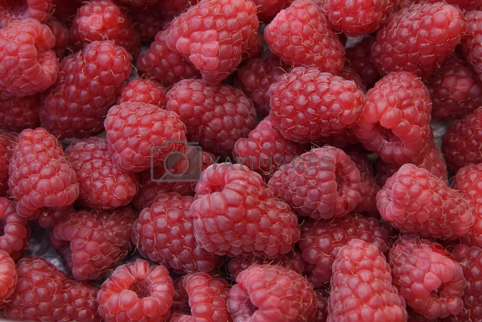 closeup detail of fresh raspberries freshly picked
