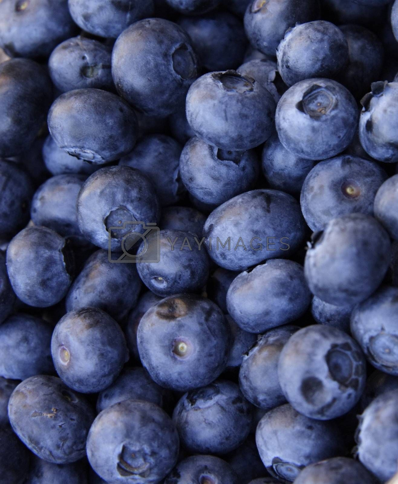 detailed image closeup of blue berry fruits