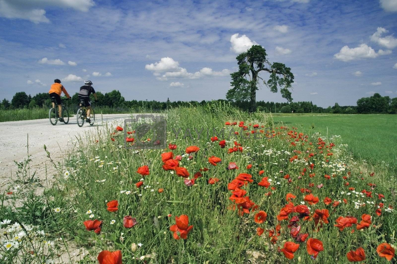 Training of bicyclists on beautiful road with a blossoming poppy. The picturesque dark blue sky with clouds.