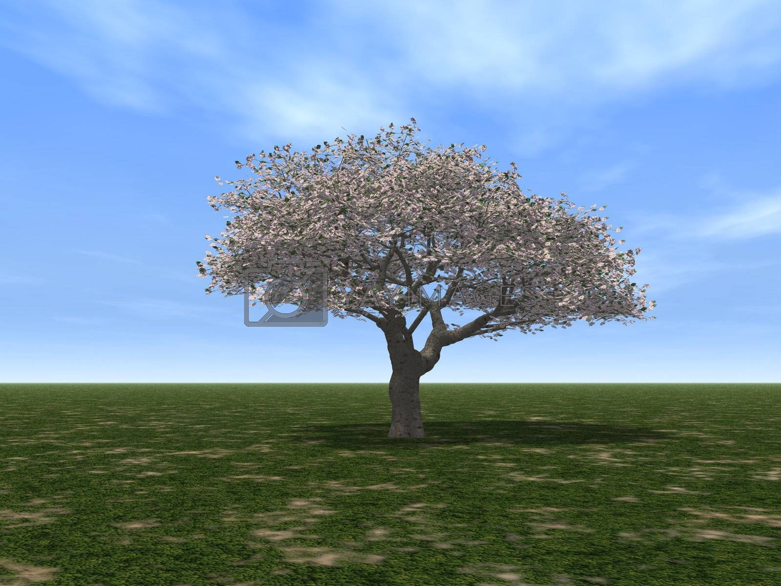 a tree on a green field and blue sky - 3d illustration