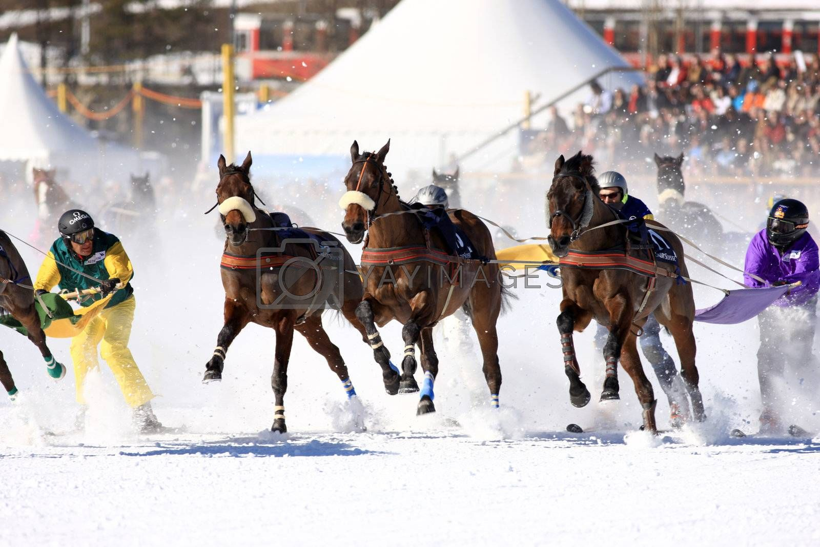 Royalty free image of White Turf 2008 in St. Moritz by monner