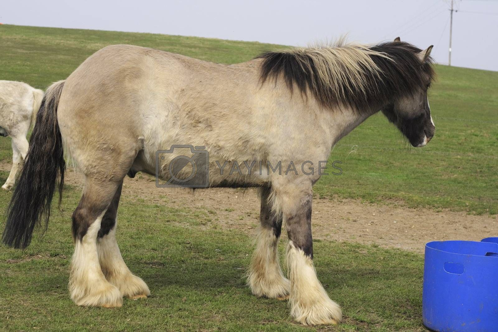 large horse standing in a field with food bucket