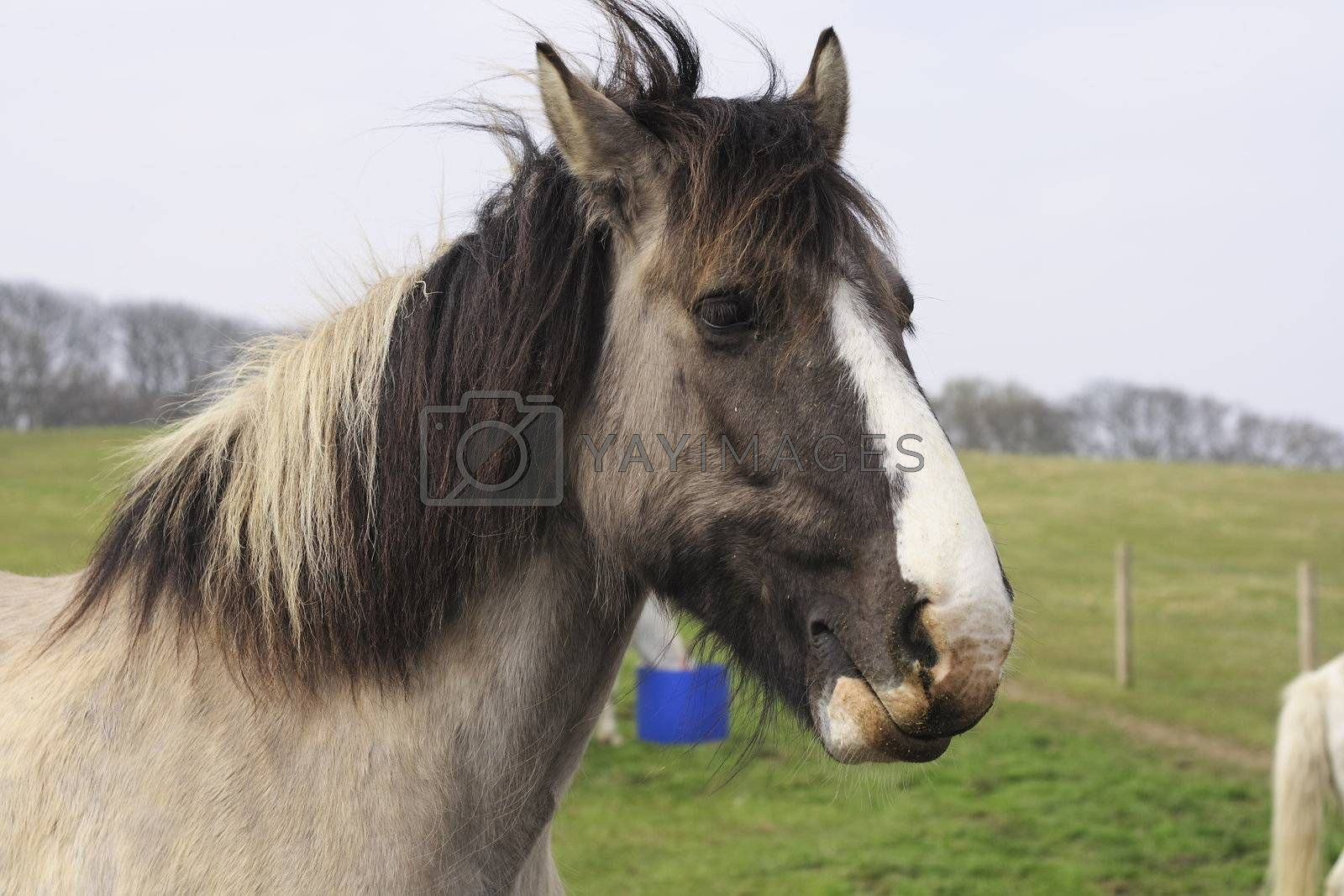 closeup of the head of a horse in a field