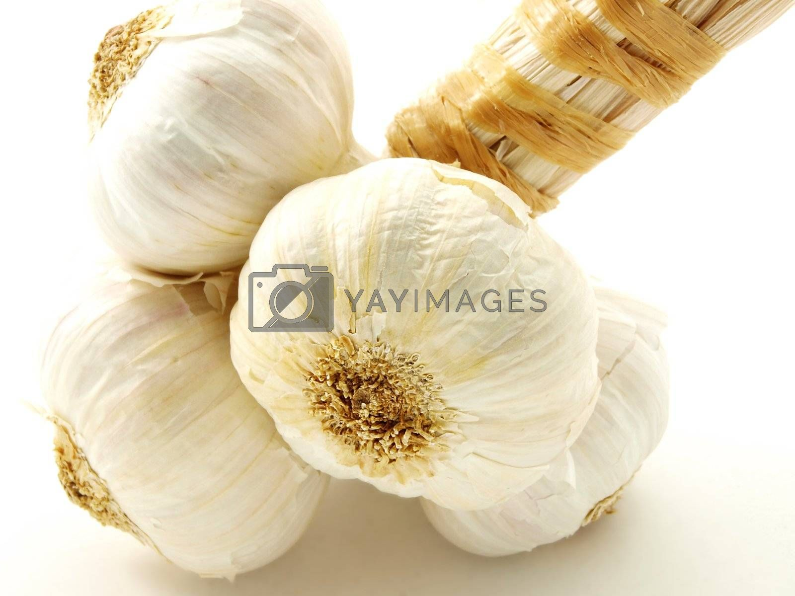 Garlic by AB_Photostudio