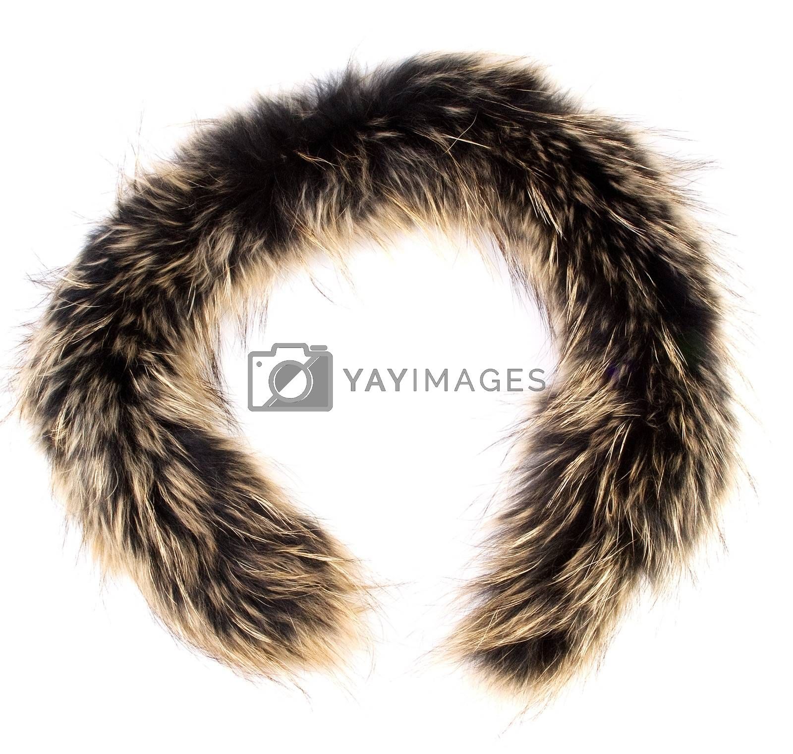 A fur isolated on the white background