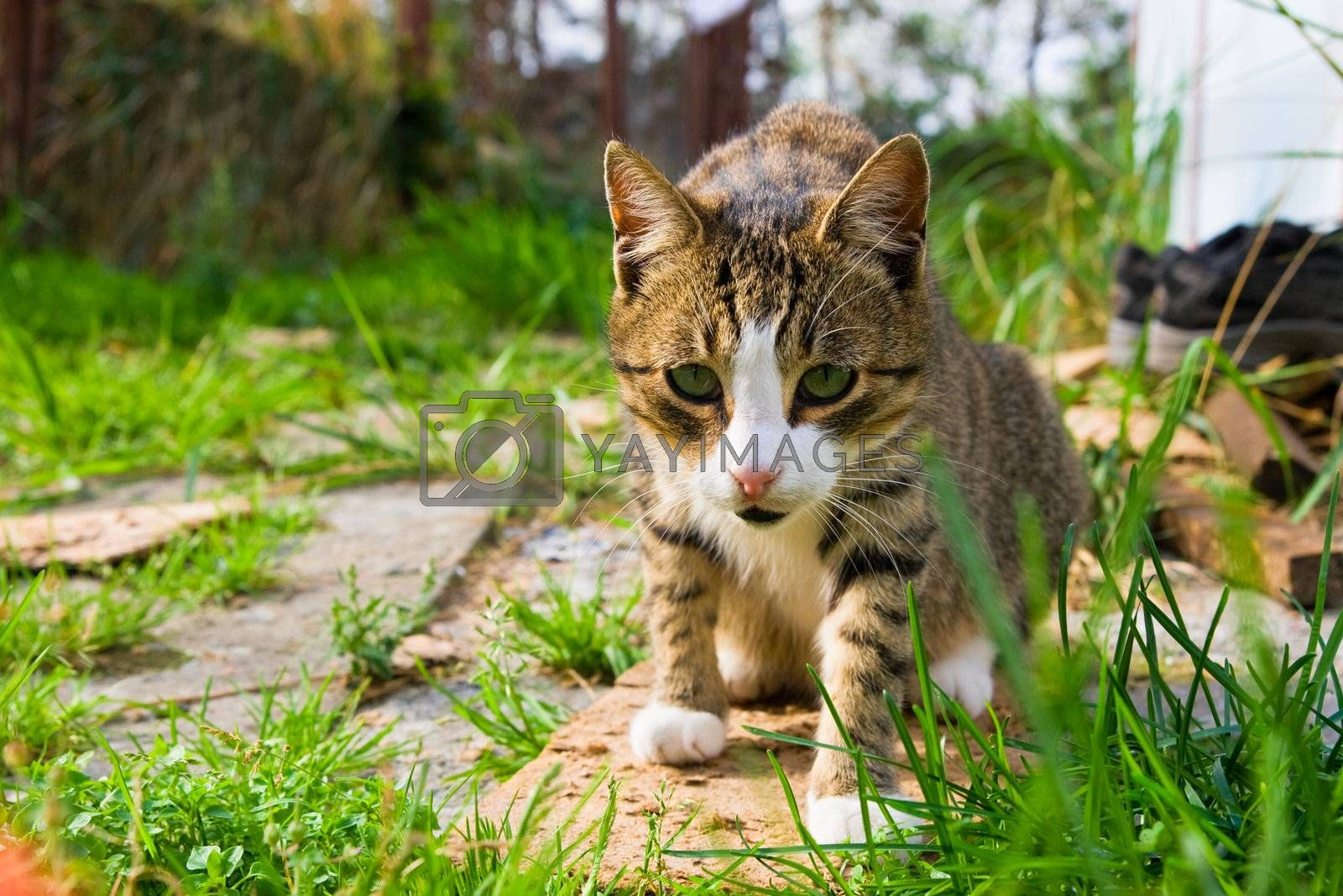 Royalty free image of Cat in the grass by seawhisper
