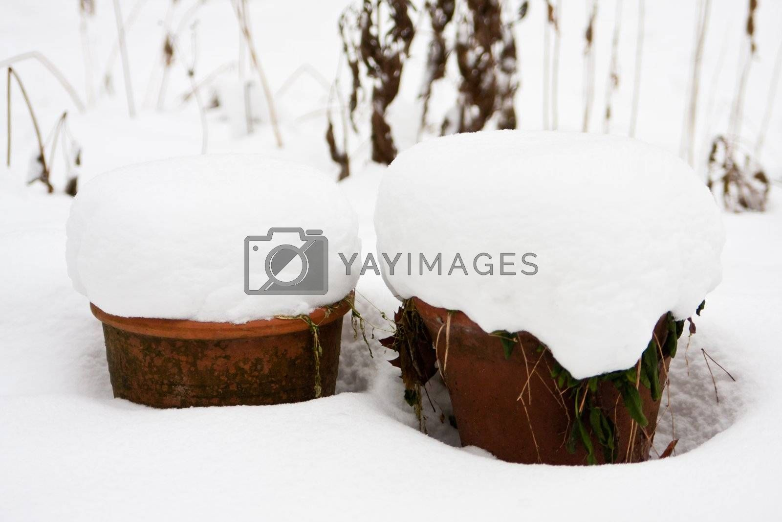 Royalty free image of snow-covered flower pot by Copit